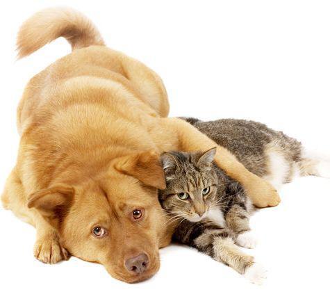 Для собак и кошек